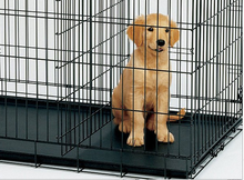 china dog cage/ plastic toy cage/ dog flight cage