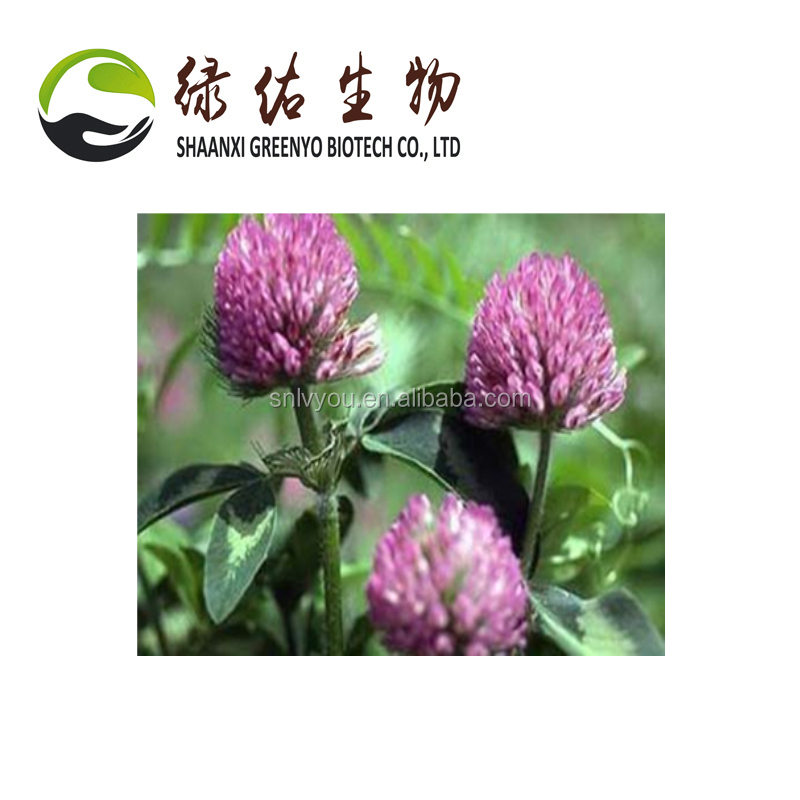 High quality Red Clover Extract 100% Pure natural fromTrifolium Pratense,Trifolium Pratense Extract,