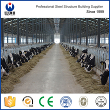 Prefab steel structure dairy cow shed frame