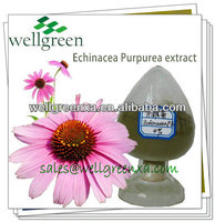 Manufacturer Supply Pure Echinacea P.e/echinacea Purpurea Herb P.e