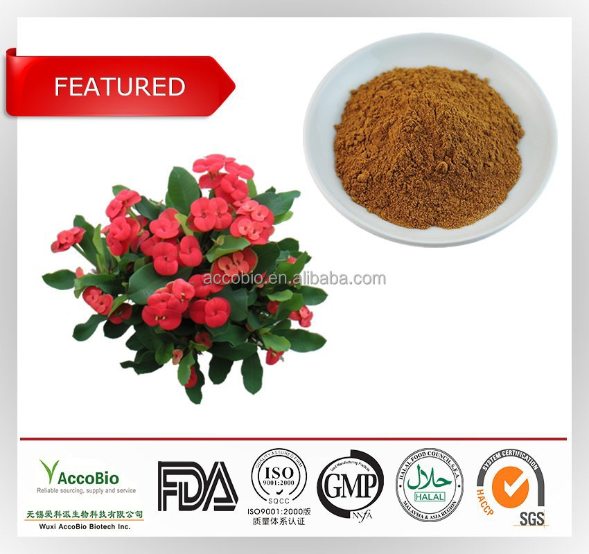 High quality Natural extract of crown of thorns wholesale, Plant extract of crown of thorns in bulk