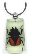 Hot sale creative unique REAL insect keyring for men