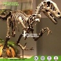 Lifesize Dinosaur Fossil for Museum