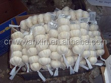 Chinese fresh garlic with good quality