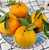 Chinese fresh sweet  mandarine oranges navel orange