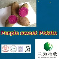 GMP Manufacturer pure natural Purple sweet Potato P.E.