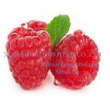 Natural mighty Raspberry Fruit Extract raspberry ketone 98% 99%