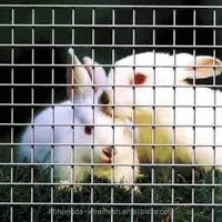 Best Selling welded wire mesh for rabbit cages