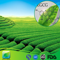 Green tea extract catechin acacia catechu extract powder