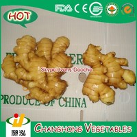 ginger Variety and Common Cultivation Type ginger
