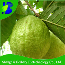 2018 Hot sale guava seeds, fruit tree seeds
