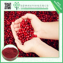 TOP quality cranberry extract/anthocyanin 25% cranberry juice extract/bilberry fruit powder