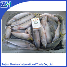 frozen aquatic products pacific mackerel fish for marketing