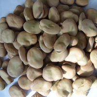 Hot sale high quality dried for Bulk Dry Fava Beans