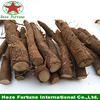 Grade A Royal paulownia shan tong root rootstock certificated