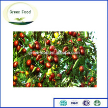 High quality fresh jujube fruit and dehydrate jujube for sale