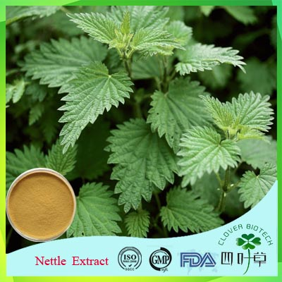 Hot Sale High Purity Smartweed Extract