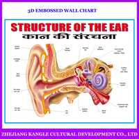 India language PVC environmentally painting educational baby toys wall chart with ear structure anatomy
