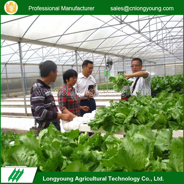 Fashion professional commercial anti-dew plastic tunnel greenhouse