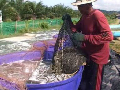 POLYETHYLENE FISHING & AGRICULTURAL NETS