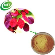 GMP manufacture Kosher Approved Health food herb 98% Fisetin Extract