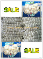 Frozen Garlic/Fresh Ginger And Garlic Packing In 20kg Mesh Bag