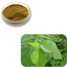 Dielegance Sell Powerful Skin Whitening Mulberry Leaf Extract