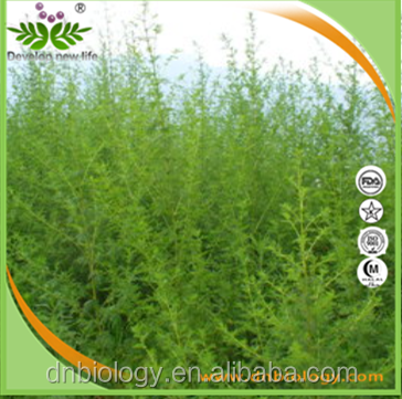 capillary wormwood herb extract, argy wormwood leaf p.e., wormwood powder