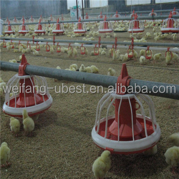 low cost steel frame prefabricated chicken house poultry farming business plan