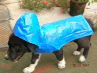 customized PVC raincoats dogs