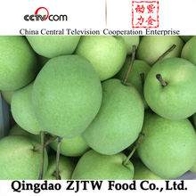 shandong pear/ fresh fruit exporters China