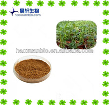 Officinal Dendrobium Candicum extract powder