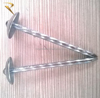 common nails / roofing nails / coil nail ( FACTORY )