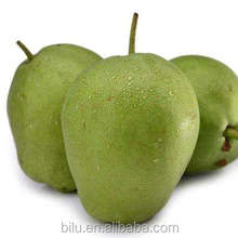Hot Sales Fresh Fruit Shaanxi Pear Exporter