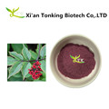High quality hot sale elderberry extract