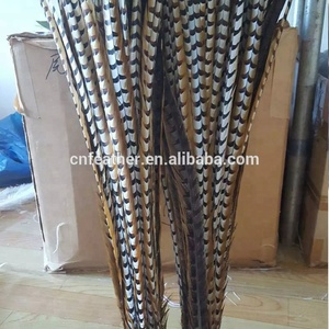 Wholesale Beautiful and Cheap Pheasant Tail Feathers Natural Reeves Pheasant Feathers