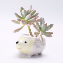 9.5*6.8*4.5cm various cute cheap ceramic hedgehog animal flower pot for sale