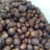 S117 High germination rate loquat seeds and Pipa Seeds