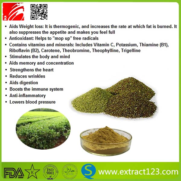 Yerba Mate Tea Extract Powder