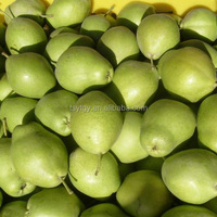 Fresh early su pear with best price by whole sale