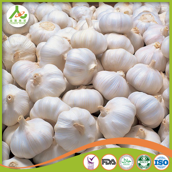 China fresh garlic/garlic price