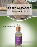 Synthetic Mysore Sandalwood Oil