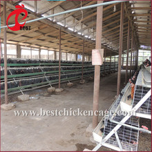 Multifunctional 160 layer chicken farming for wholesales
