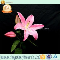 Colorful and Reasonable classical new arrival African lily