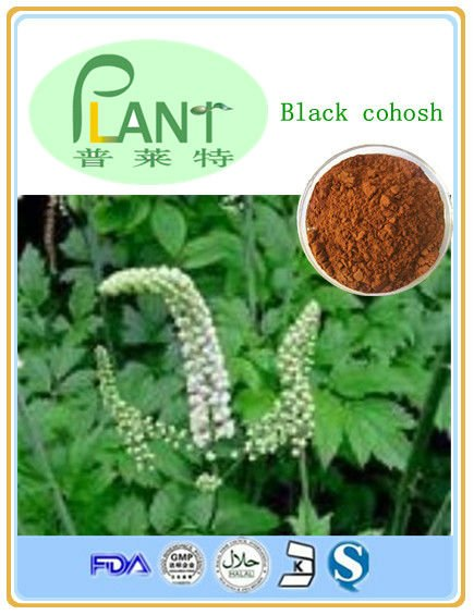 Cohosh đen chiết xuất bột; 2.5%- 8% glycosides triterpene