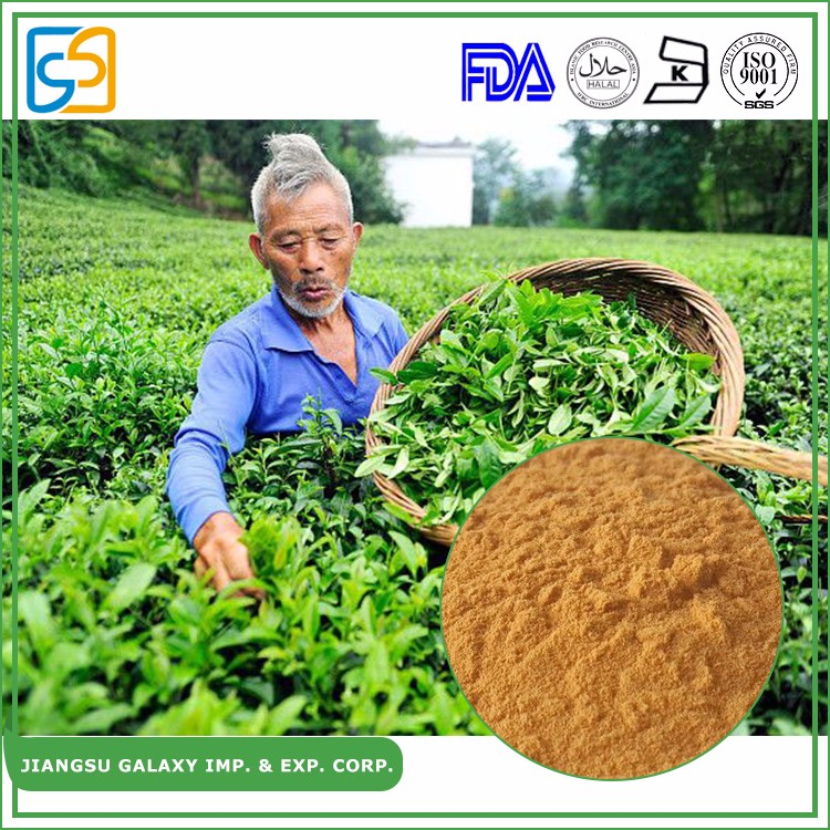 GMP manufacturer water soluble polyphenols green tea extract powder