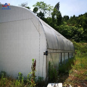 Single span commercial plastic blackout greenhouse for light deprivation