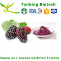 Tonking Offer Mulberry Extract Powder