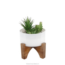 new design succulents plants cv manufactured in China