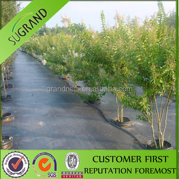 China factory direct sale of PP and PE black ground cover with green line